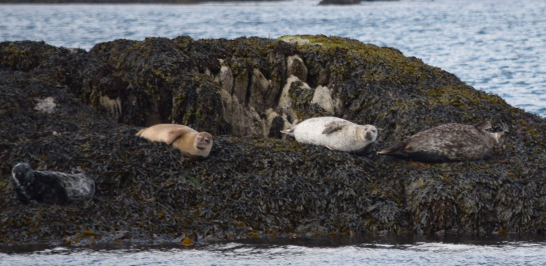 Seals galore
