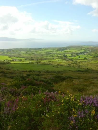 Fields of West Cork