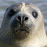 Mr Seal