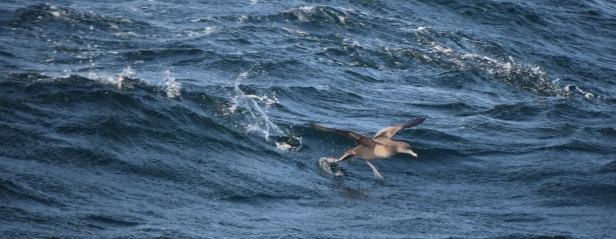 Sooty takes flight