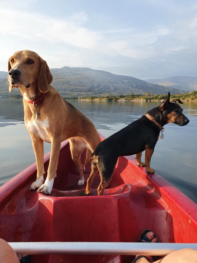 Doggie adventures